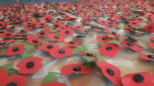 Remembrance Week Poppies